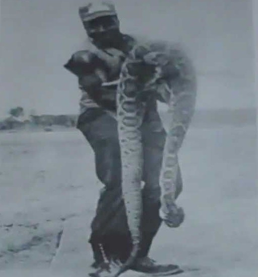 Vintage MONSTER rattlesnake photo