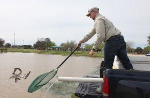 Attention fishermen: Missouri City's Community Park recently restocked with catfish, trout
