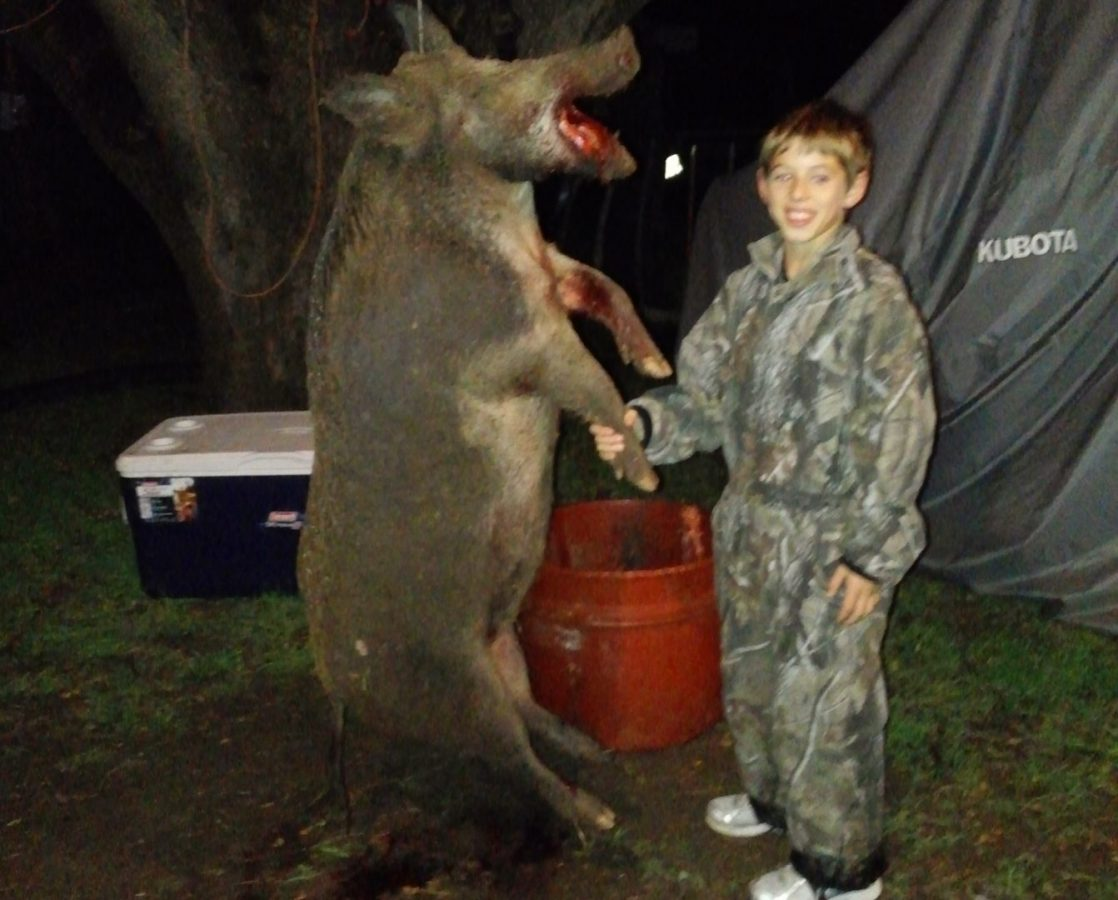 Moster wild hog