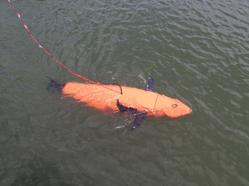 TPWD and Homeland Security Release Robot Fish