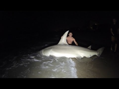 Florida Anglers Catch and Release 700-pound Hammerhead Shark