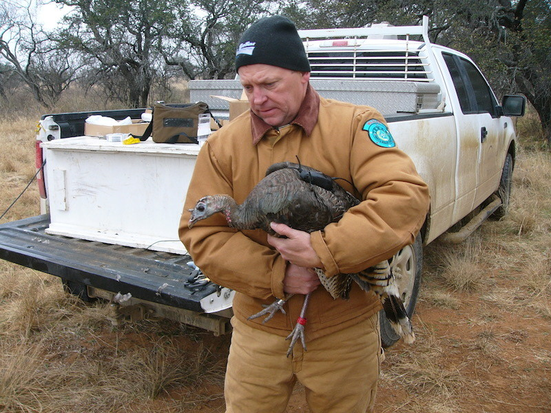 Hill Country Rio Grande Turkeys Geared Up for Information Exchange