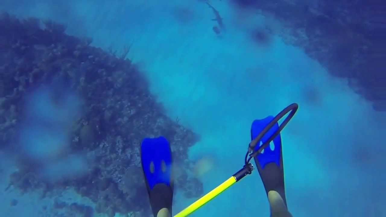 Video: Spearfisherman Fends Off Shark Attack
