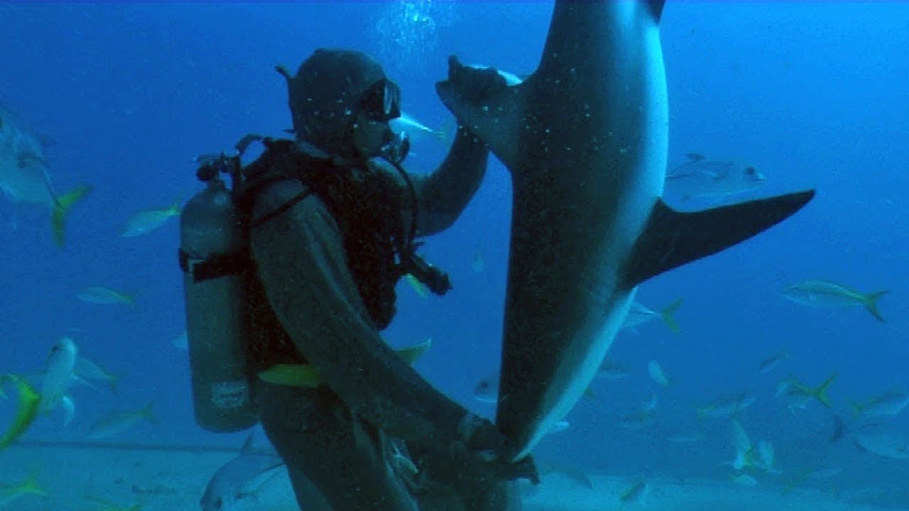 Watch What Happens When Scuba Divers Touch a Shark's Nose