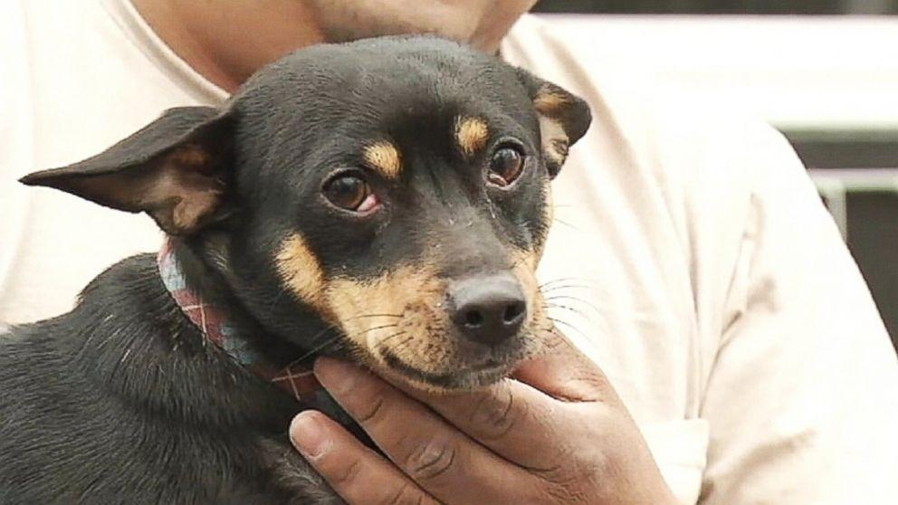 Chihuahua Mix Halts Mail Delivery to Iowa Neighborhood