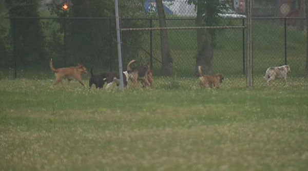 13-year-old boy attacked by pack of wild dogs in east Houston