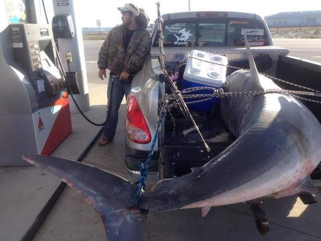 805-pound shark catch may set record