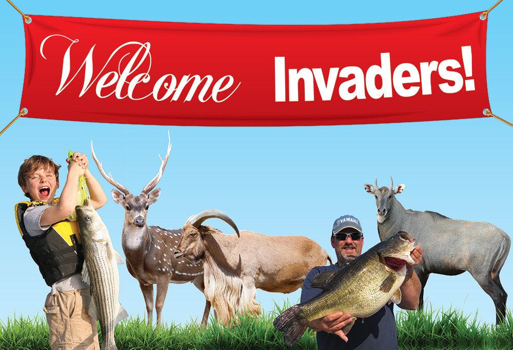 Welcome Invaders!