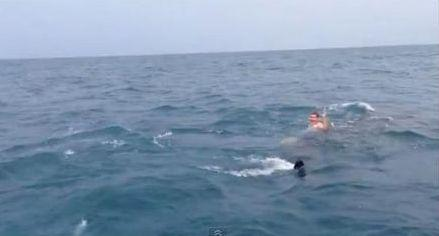 VIDEO: Florida man rides the back of a giant shark!