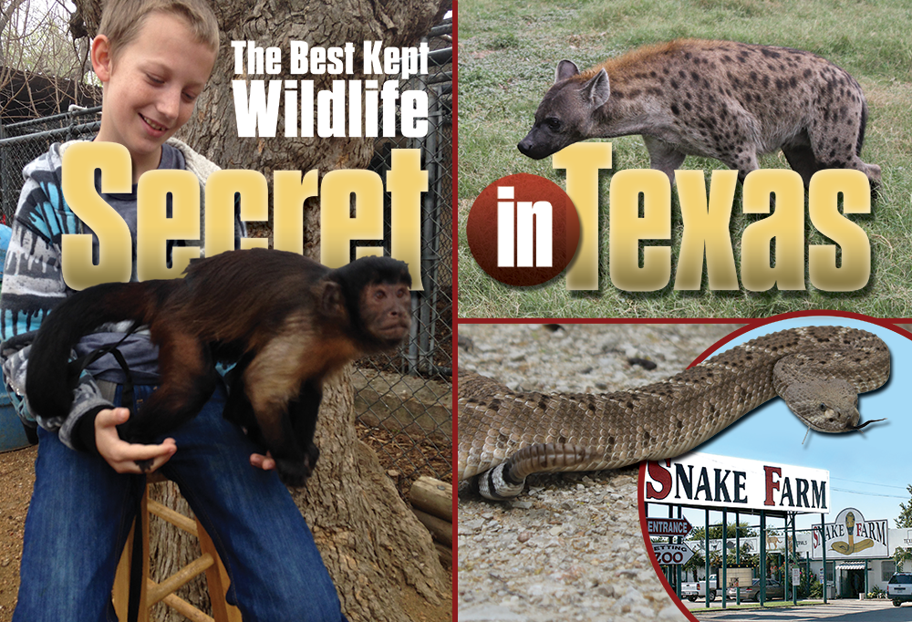 The Best Kept Wildlife Secret in Texas