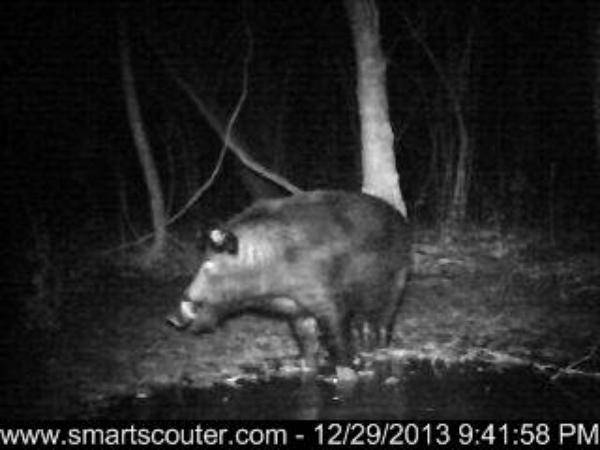 BIG hog photos wanted
