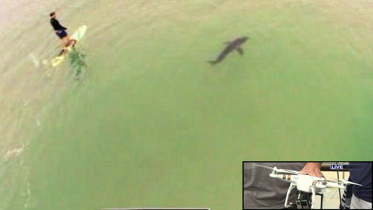 Video: Shark swims near paddleboarders