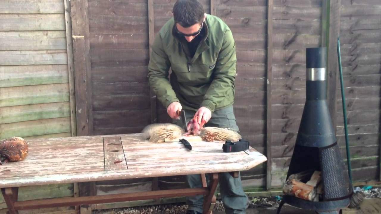 Video: Easy Way to Skin a Pheasant