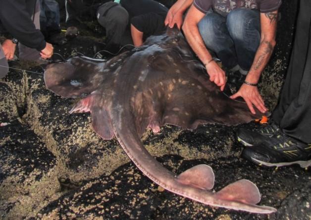 Biggest UK fish ever caught off Isle of Skye