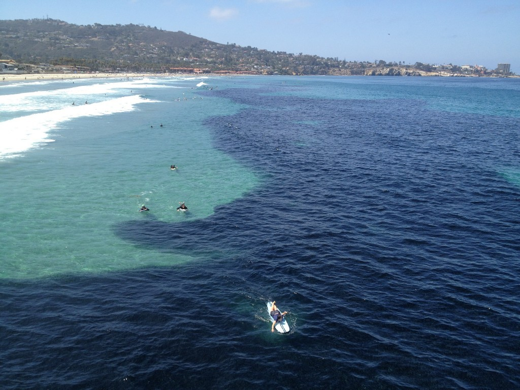 Massive school of anchovies looks like oil slick