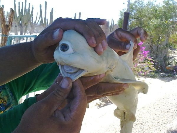 5 truly weird fish caught off Baja