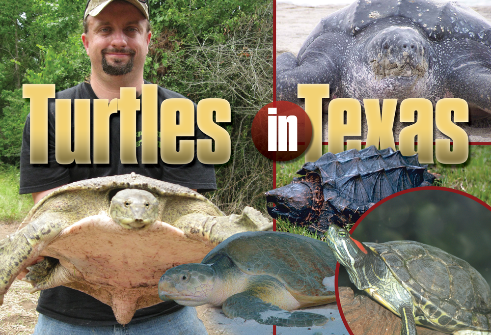 Turtles in Texas