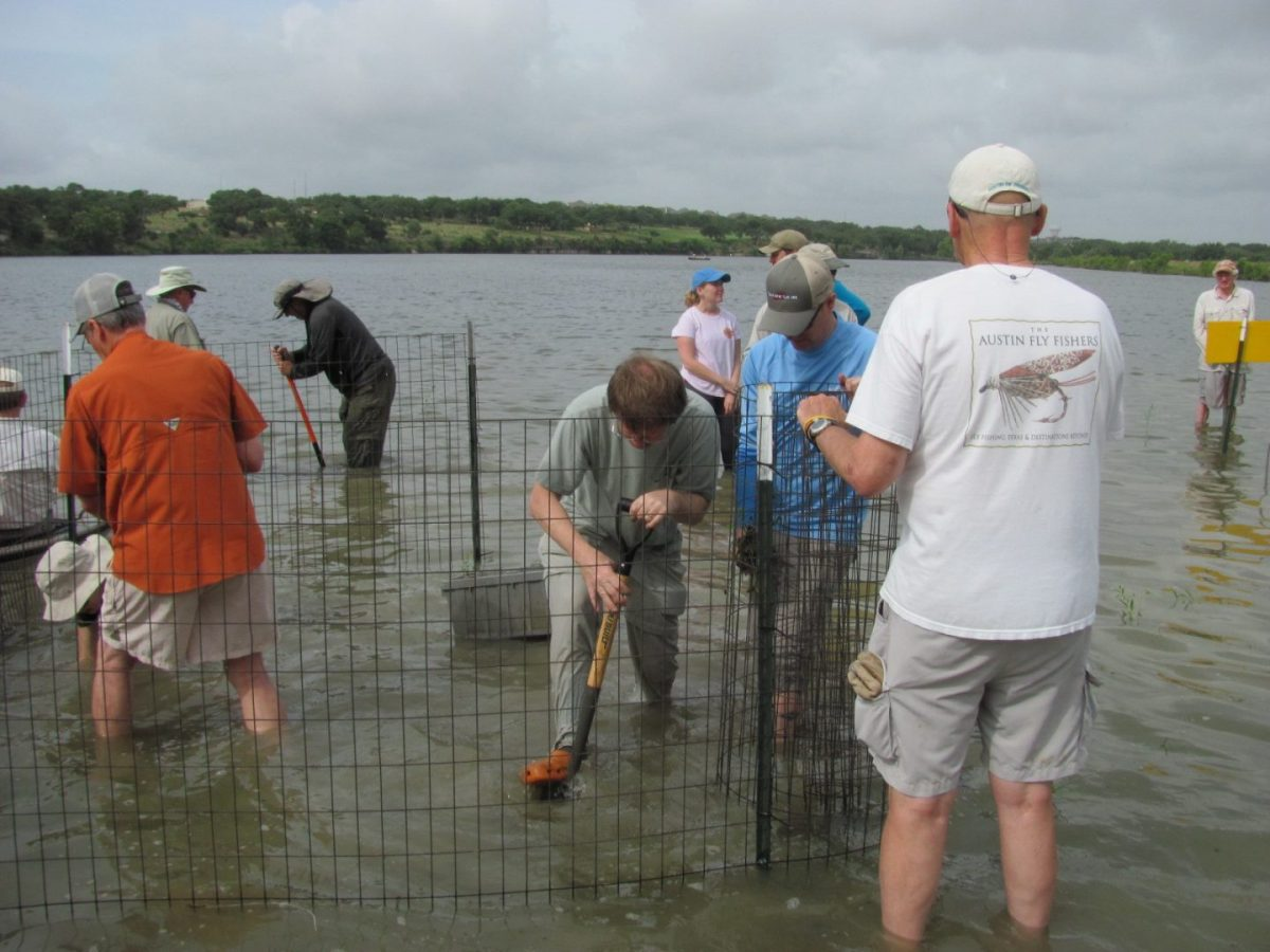 Fish Habitat at Brushy Creek Reservoir Enhanced with Aquatic Vegetation Plantings