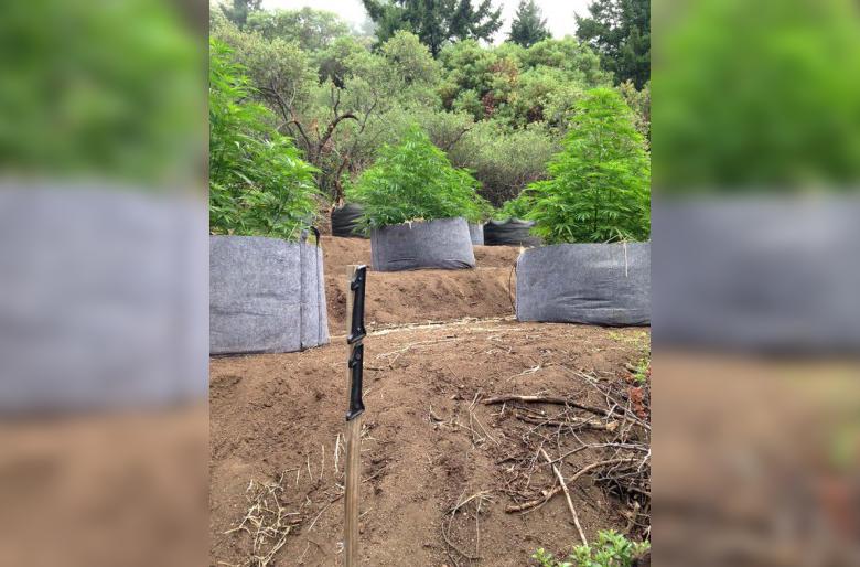 Two California Men Arrested for Diverting Stream, Endangering Salmon to Grow Marijuana