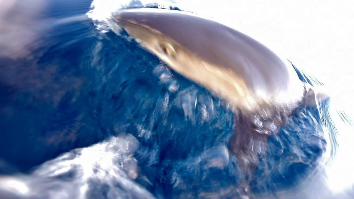 Shark Attacks My GoPro and Hand (VIDEO)