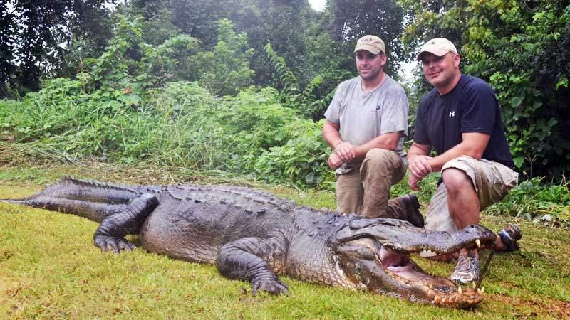 record-aligator