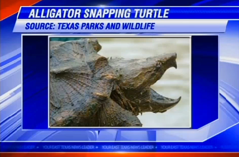 Longview man arrested for possession, eating threatened turtle species
