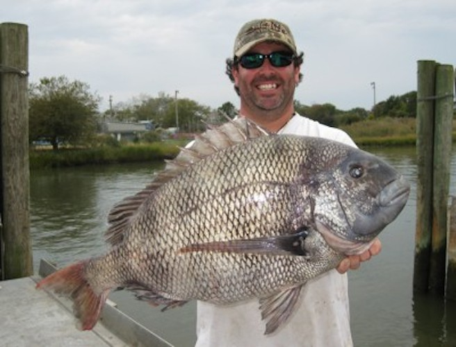 outdoorhub-delaware-angler-catches-delicious-record-sheepshead-2014-10-10_16-25-41-400x305
