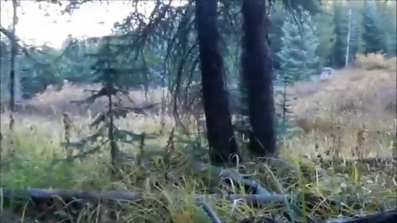 Bowhunters Have Close Encounter of the Bull Moose Kind (VIDEO)