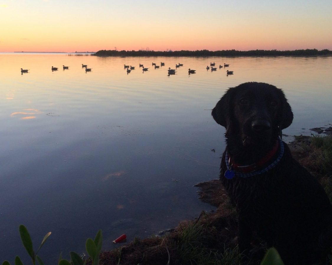 Huckleberry Finn's 1st Duck Hunt