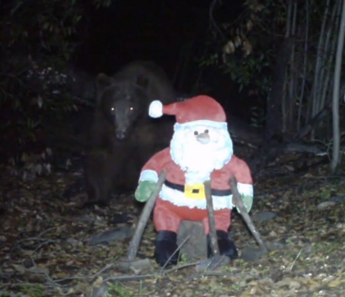 outdoorhub-video-trail-cam-catches-bear-knocking-santa-2014-12-19_16-51-15-698x600