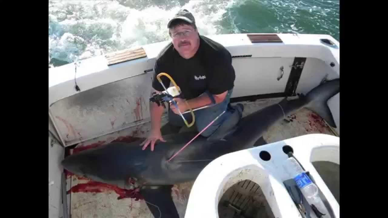 Harvesting a 10-foot Shark with a Slingshot (VIDEO)