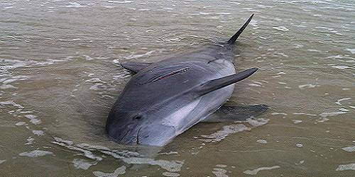 Orange County Brothers Guilty of Killing Bottlenose Dolphin in Cow Bayou
