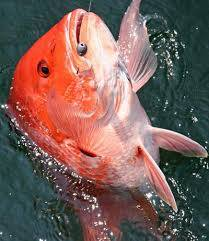 Red Snapper season length proposal