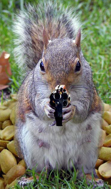 Of pistol barrels and bushy tails: Six great squirrel hunting handguns