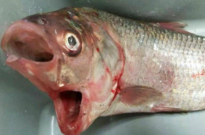 What the Heck? You Have to See the Photos of the Bizarre Fish Caught in Australia to Believe It