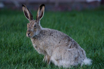 """DEA Agent: Marijuana Cultivation Could Lead to """"Stoned Rabbits"""" Unafraid of Humans"""