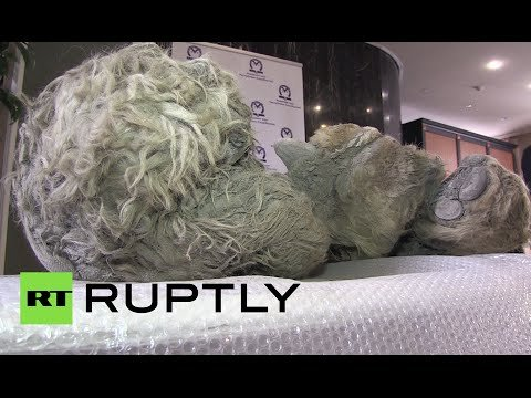 Russian Hunters Discover 10,000-year-old Frozen Woolly Rhino in River