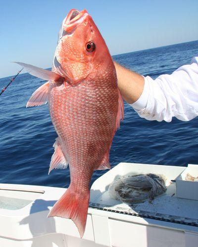 Red snapper quotas … part 2