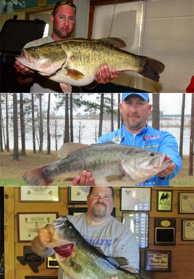 3 mammoth bass caught in Texas lakes in one afternoon