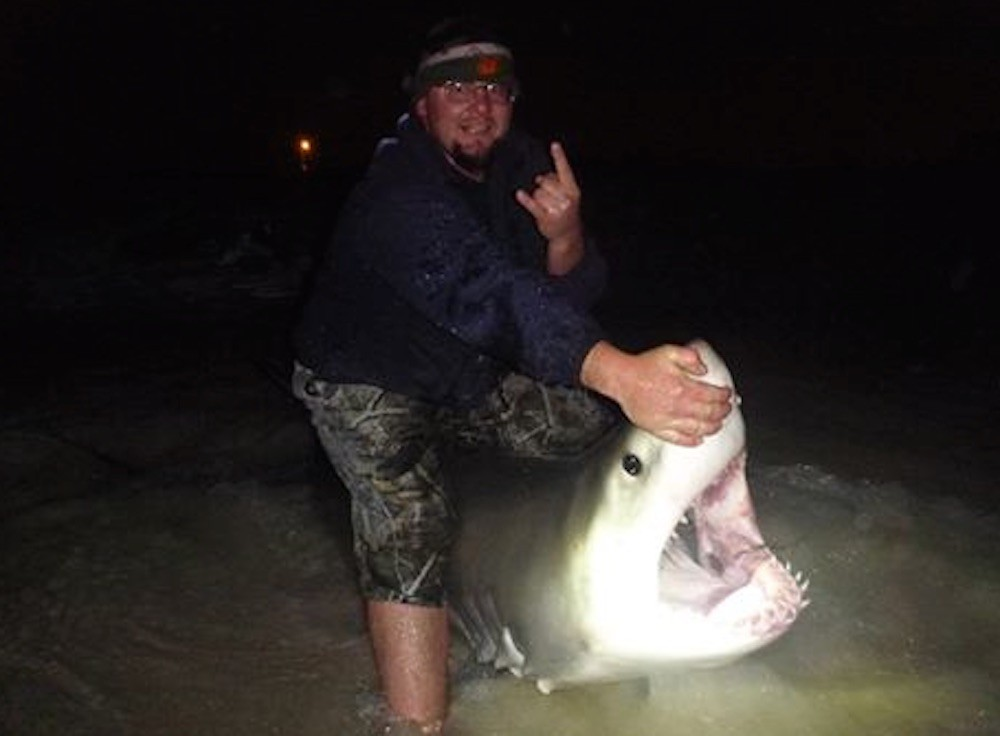 Huge Great White shark pulled from the Gulf of Mexico by fishermen