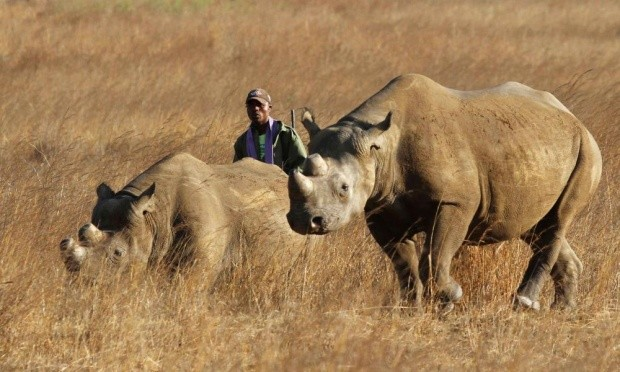 U.S. spy agencies may start hunting wildlife poachers in Africa