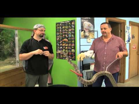 The King of All Snakes (Video)