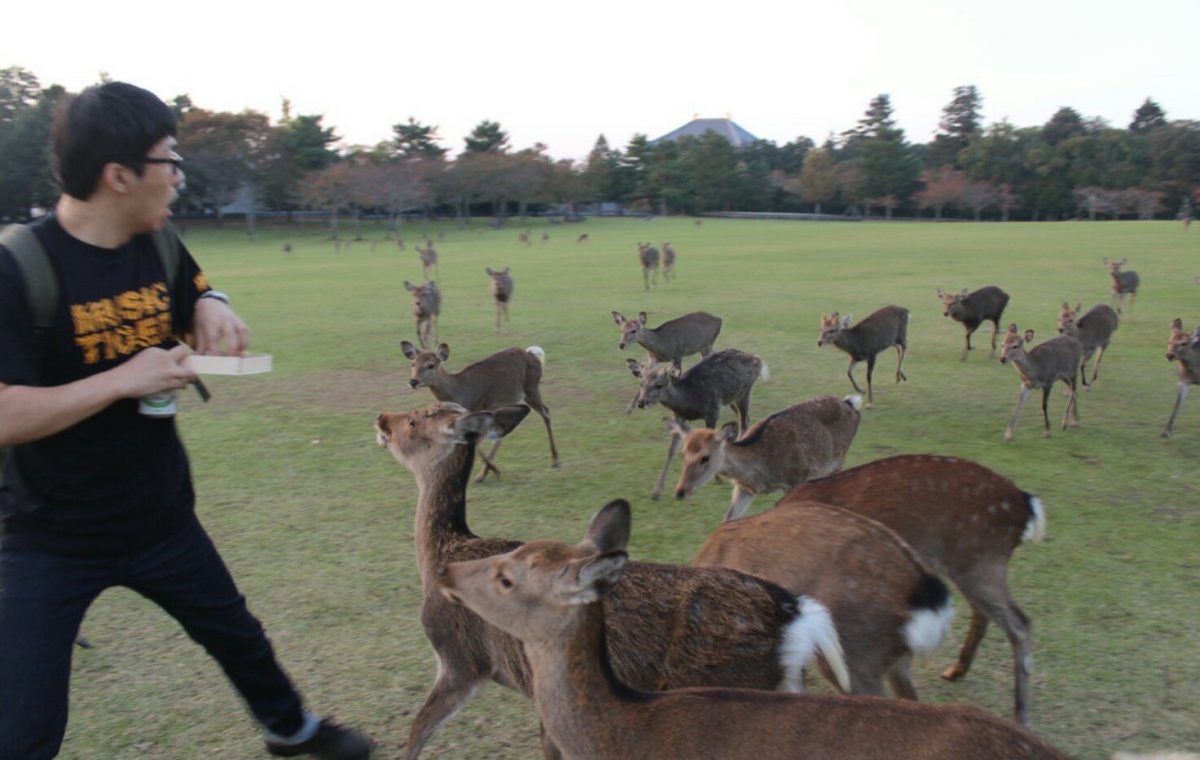 "This is Why You Don't Feed ""Park Deer"""