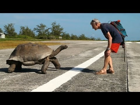 Watch: Man Interrupts Mating Tortoises, Leads to Slowest Wildlife Chase Ever
