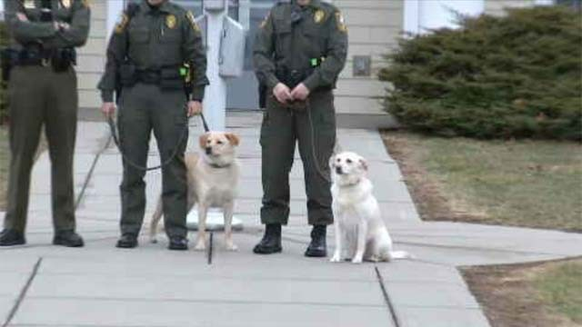 WATCH: Dogs trained to sniff out illegally caught fish