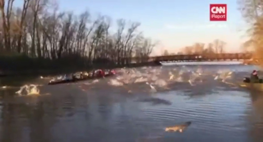 WATCH: Flying fish attack college rowing team in rural Missouri