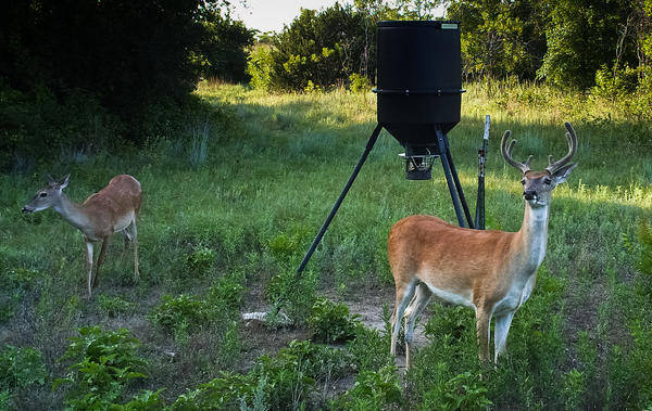 Bill Proposing Constitutional Protection of Hunting Passes Texas Senate