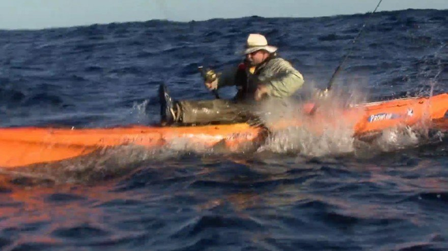 WATCH: Shark Steals Kayak Angler's Catch Right Out of His Hands