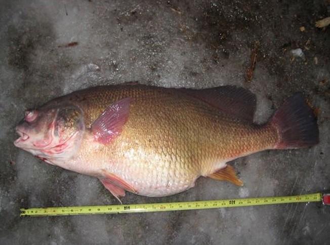 Michigan Fisherman Shatters State Drum Record