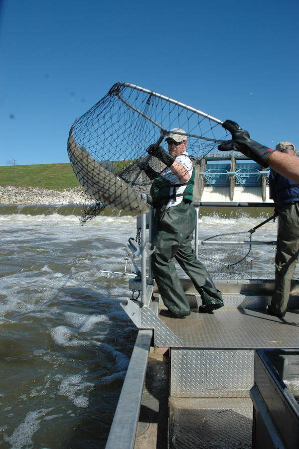 Catfish, Striped Bass Stand Out in Possum Kingdom Fish Surveys